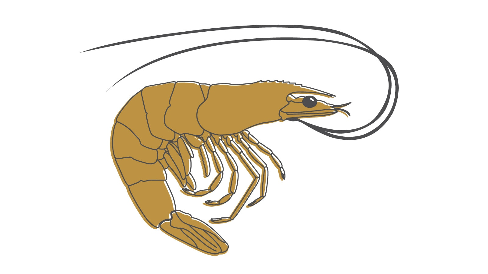 Una ilustración de un camarón.