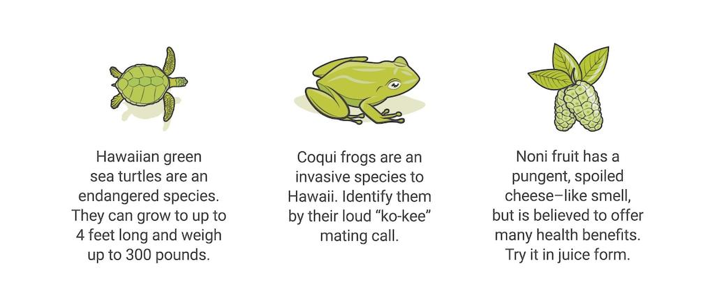 """Una ilustración de una tortuga con el pie descriptivo: """"La tortuga marina verde hawaiana es una especie en peligro de extinción. Puede llegar a crecer hasta 4 pies de largo y pesar hasta 300 libras."""" Una ilustración de una rana coquí con el pie descriptivo: """"La rana coquí es una especie invasora en Hawái. Se la puede identificar por el ruido """"co-quí"""" que hacen para aparearse."""" Una ilustración de la fruta noni con el pie descriptivo: """"El noni es una fruta de olor fuerte parecido a queso en mal estado, pero se cree que aporta muchos beneficios para la salud. Pruébala en jugos."""""""