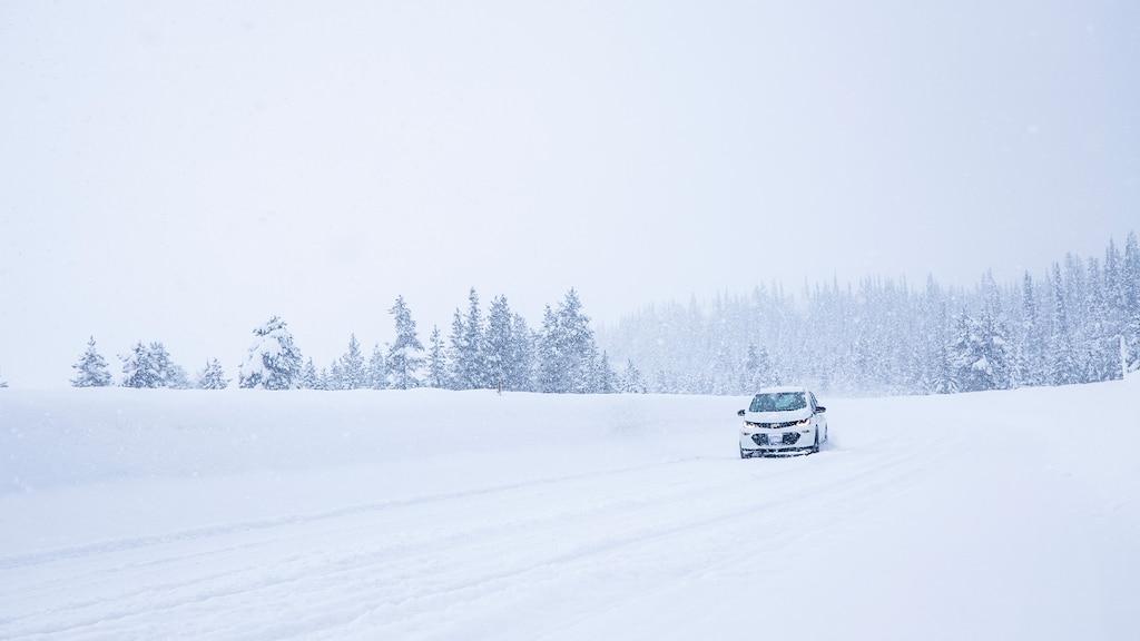 Un Bolt EV blanco solo en un camino cubierto de nieve con un bosque nevado en el fondo.
